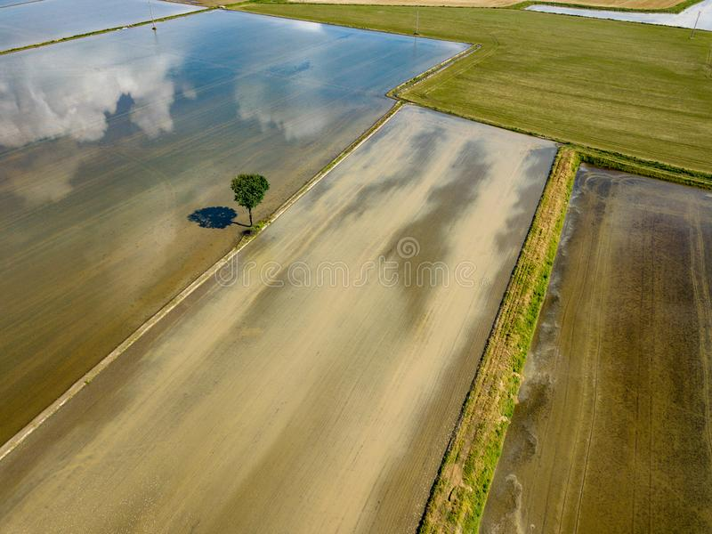 Rice farmed fields in italy aerial view stock images