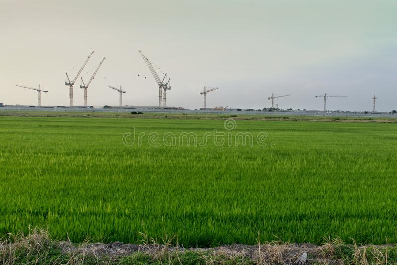 Rice farm with construction royalty free stock images