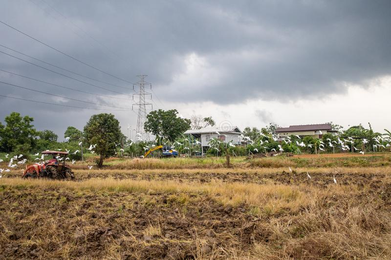 Rice farm during harvesting in Thailand. Rice farm during harvest by combining truck in rurul contryside of Thailand royalty free stock image
