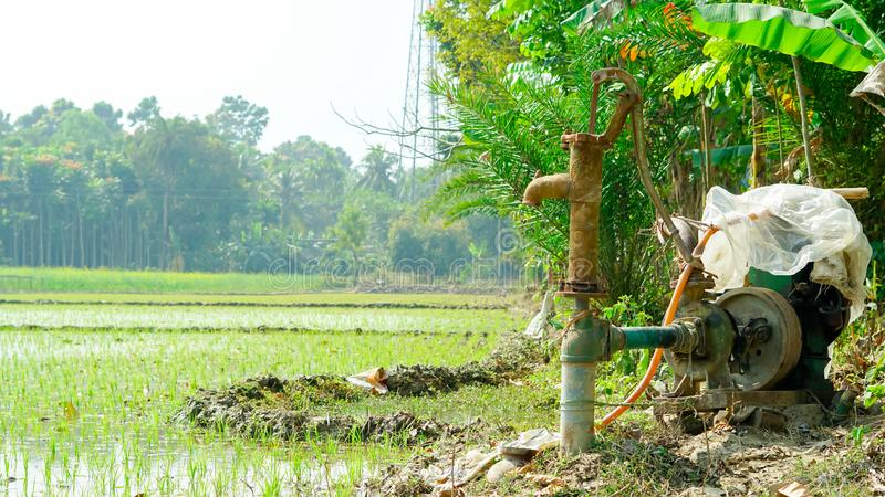 Rice farming by tube machine in winter in India. green ,landscape mode royalty free stock photography