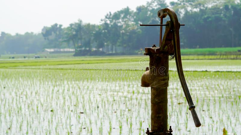 Rice farming by tube machine in winter in India. green ,landscape mode. Close up shooting of a rice seeds using macro .seeds is green.Rice farming by tube royalty free stock photo
