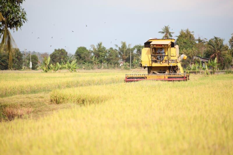 Rice Field. Harvesting machine gathering rice crops royalty free stock photos
