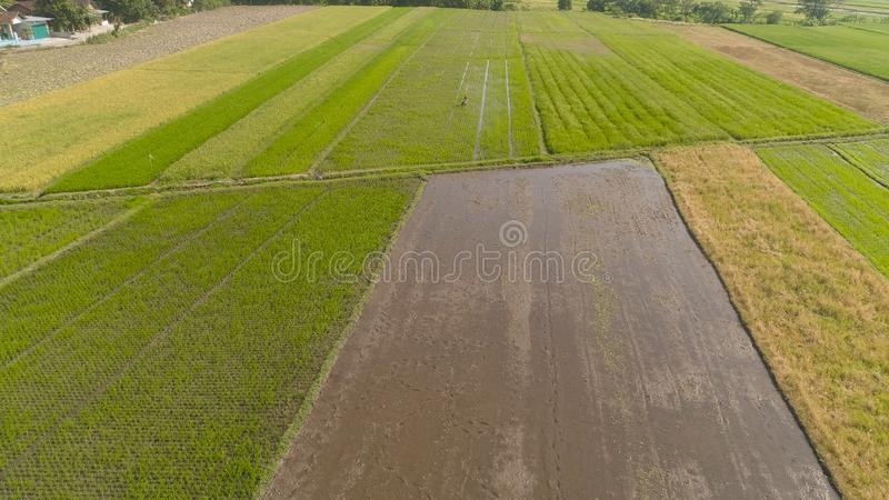 Rice field and agricultural land in indonesia. Aerial vie aerial view rice fields, agricultural land with sown green in countryside. farmland with agricultural stock image