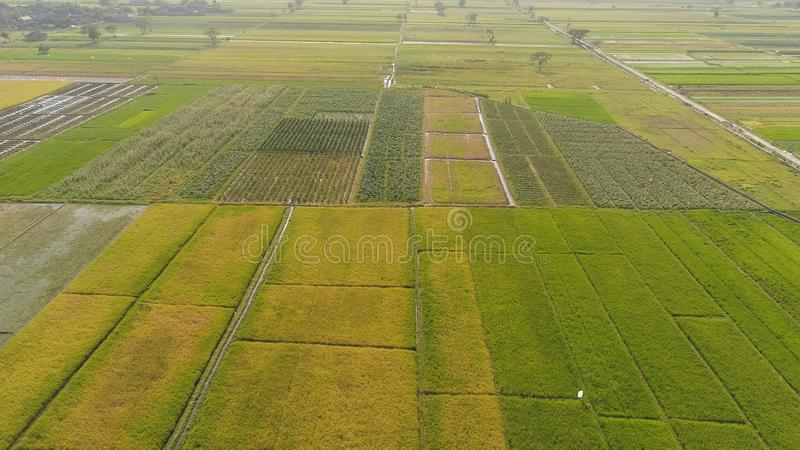 Rice field and agricultural land in indonesia. Aerial view rice fields, agricultural land with sown green in countryside. farmland with agricultural crops in stock photography