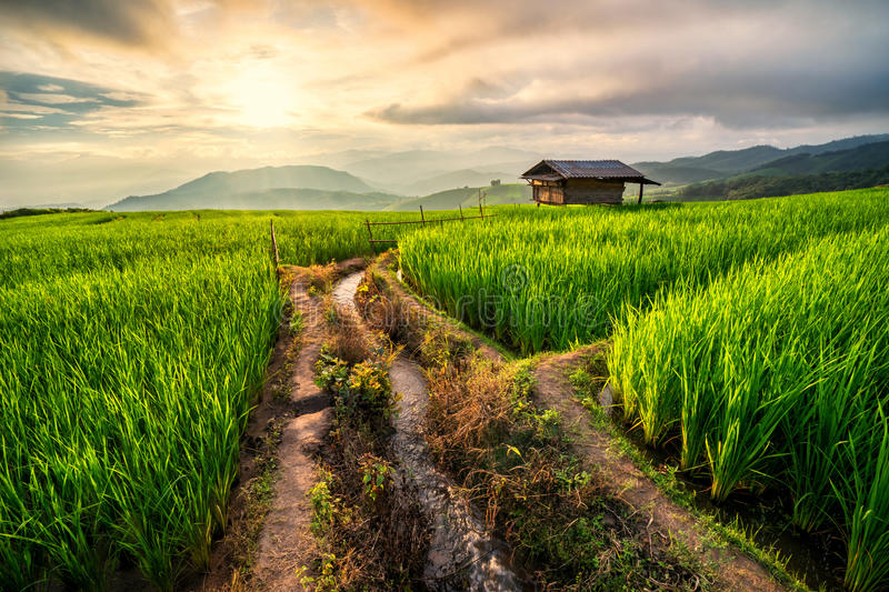 Rice field in Chiang Mai stock photography