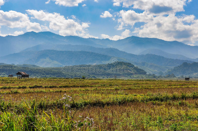 Rice field in the countryside near Muang Sing, Laos stock photos
