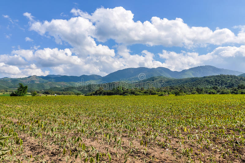 Rice field in the countryside near Muang Sing, Laos stock image