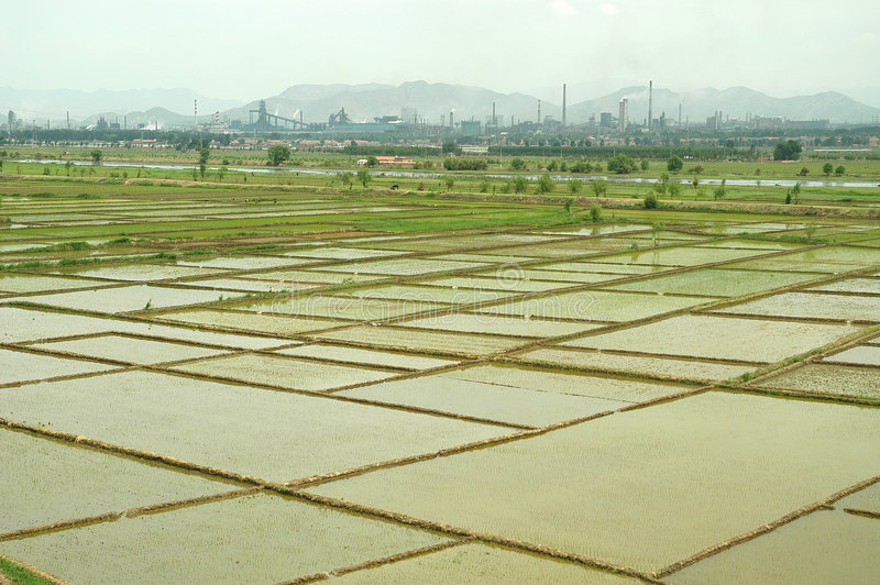 Download Rice field with factories stock photo. Image of factory - 4096558