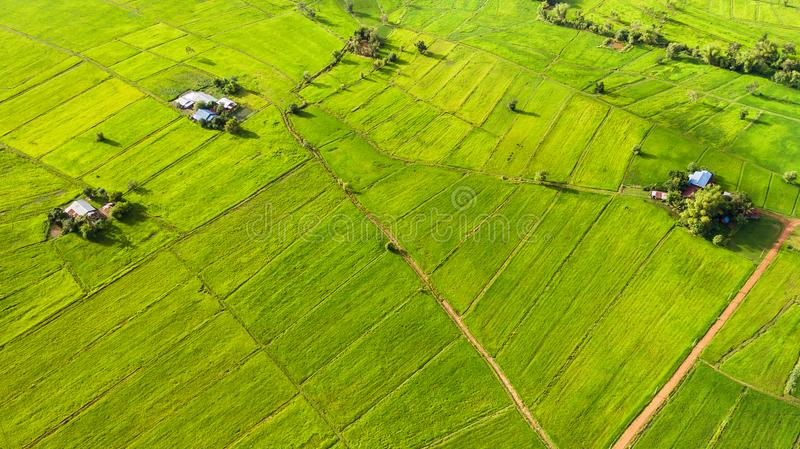 Rice field and farmers residence with high angle view. In the nature royalty free stock photography