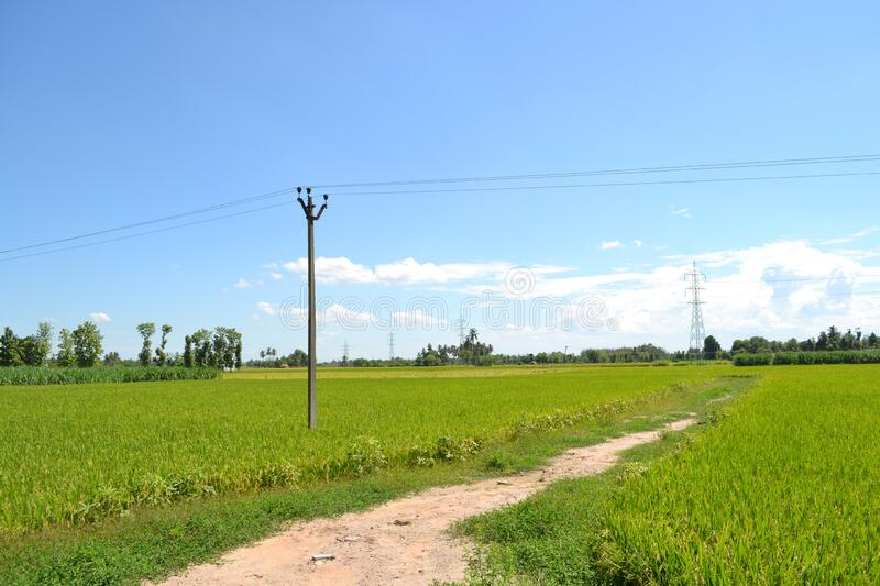 Rice Field Forming with path stock images