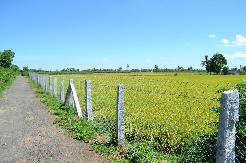 Rice Field Forming with safety  gate stock image