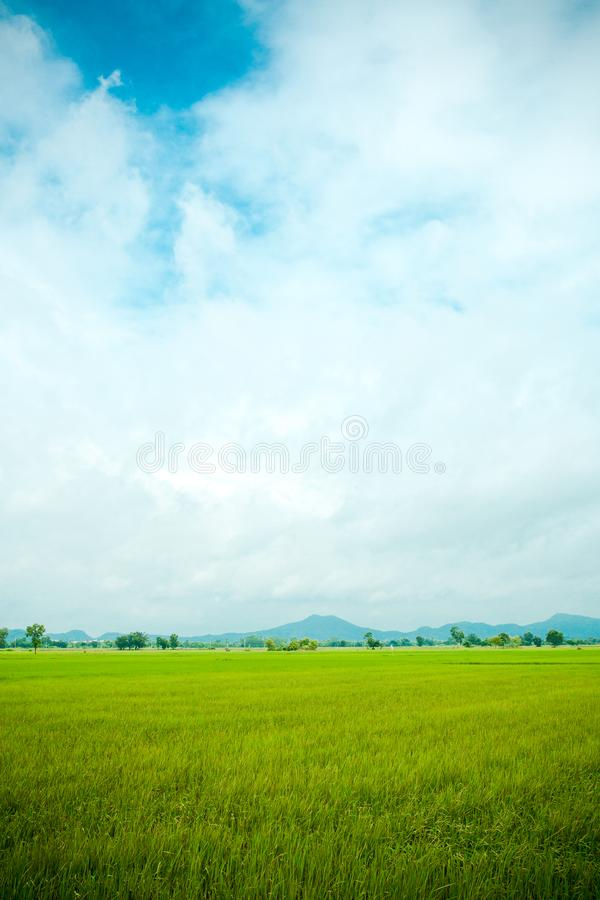 Rice field green grass blue sky cloud cloudy landscape background. stock image