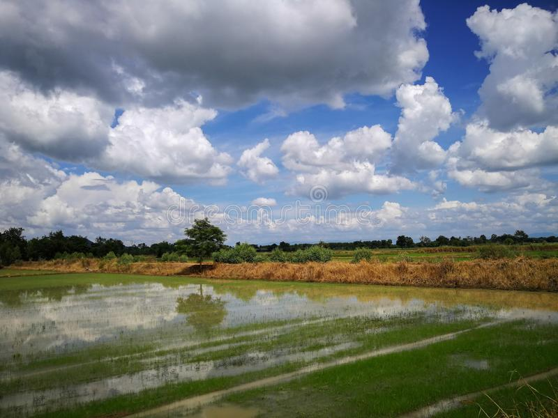 Rice field green grass field sky blue cloudy landscape background, green rice fields in Phichit, Thailand stock photos