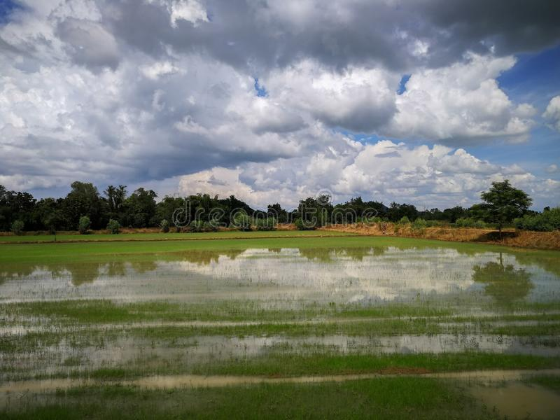 Rice field green grass field sky blue cloudy landscape background, green rice fields in Phichit, Thailand stock photography