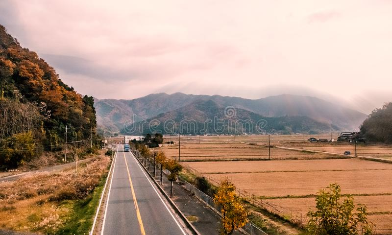 Rice field at Japanese countryside in autumn royalty free stock photography