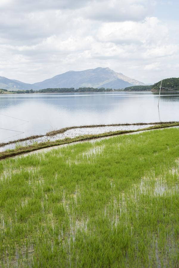 Rice field, lake and hill in Pleiku. Vietnam royalty free stock images