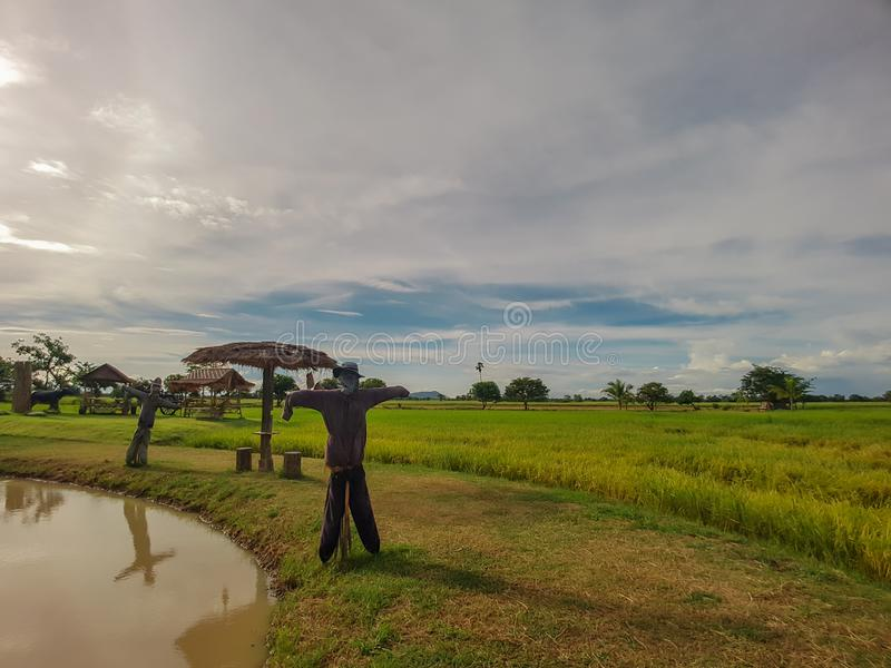Rice green field and small cabana,scarecrow with sky and cloud bac. Rice field and light in green background with cabana,scarecrow and bird`s nest stock photo