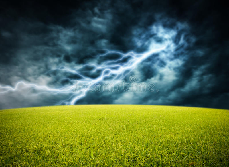 Rice field on lightning storm stock photo