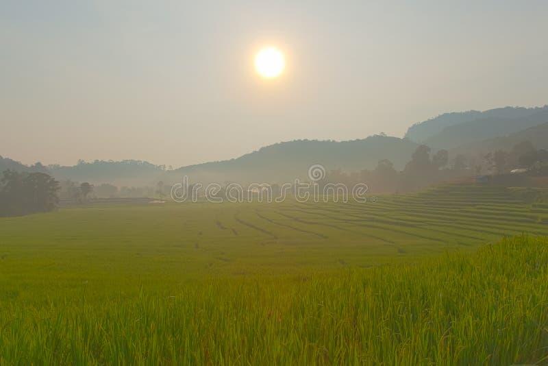 Rice field on mountain. stock photos