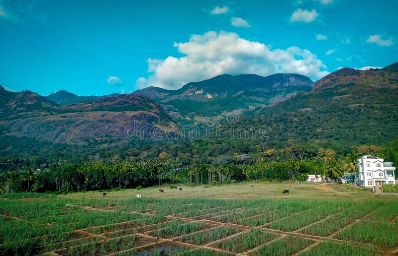 Rice Field Near Mountain at Daytime stock photography