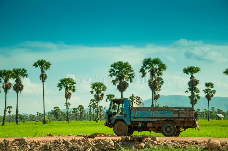 Rice field with old truck royalty free stock photography