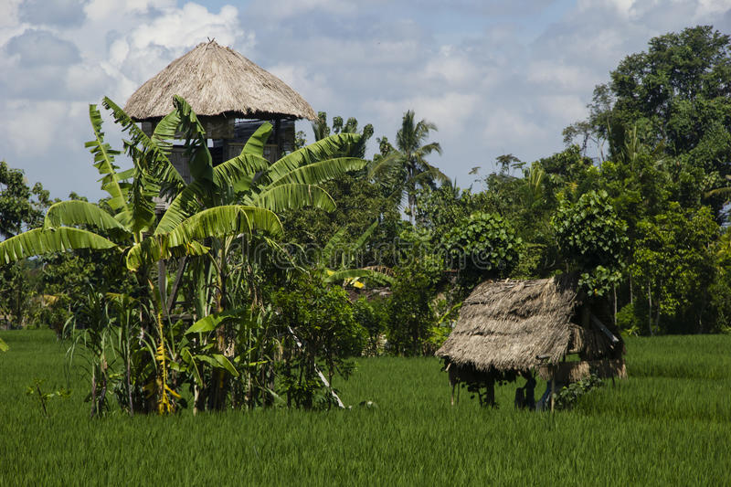 Download Rice Field With Spirit's Houses. Stock Photo - Image: 27889786