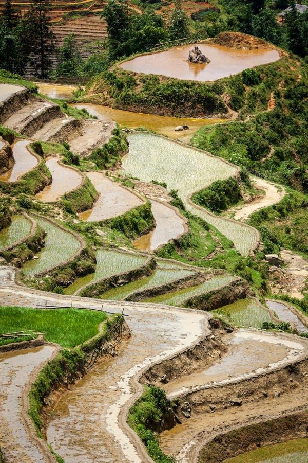 Download Rice Field Terraces. Near Sapa, Vietnam Stock Image - Image: 26837713