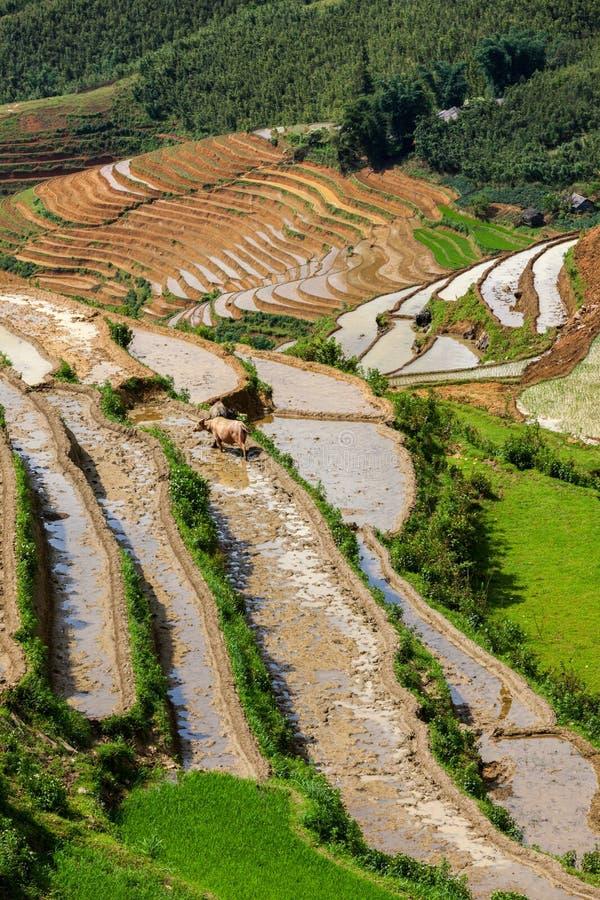 Download Rice Field Terraces. Near Sapa, Vietnam Stock Image - Image: 26837715