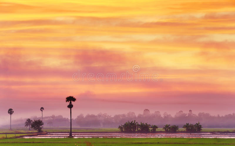 Rice Field In Twilight Stock Images