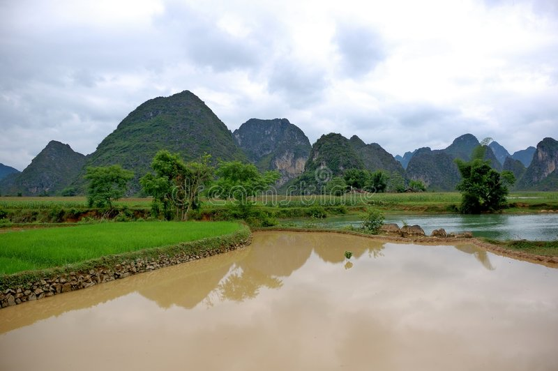 Rice field on the valley stock image