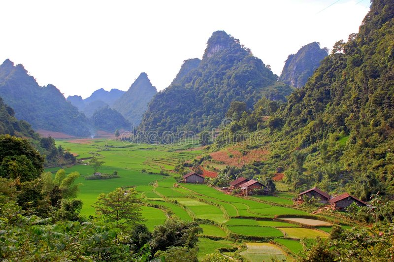 Rice field on the valley in Asia stock photo