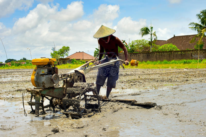 Rice field worker. Bali, Indonesia royalty free stock photos