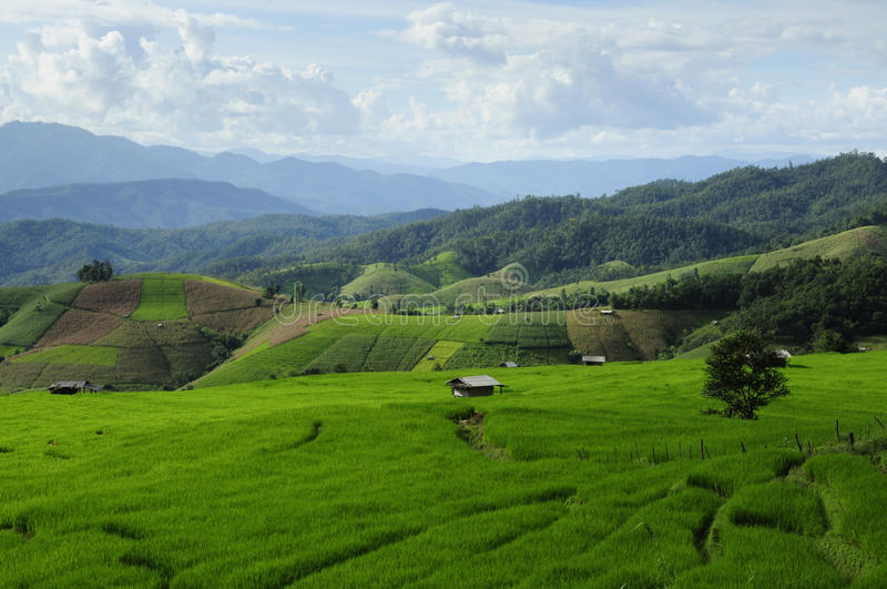Download Rice Fields Stock Photos - Image: 23145263