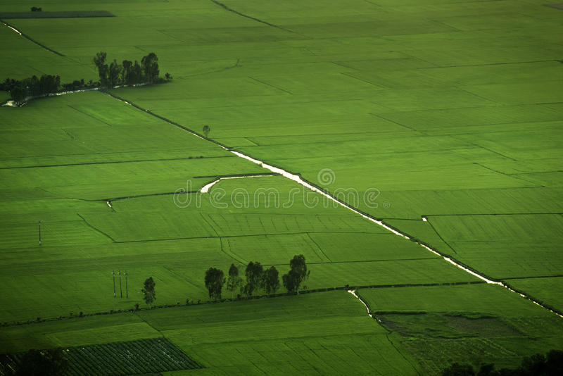 Rice fields aerial photo royalty free stock photo