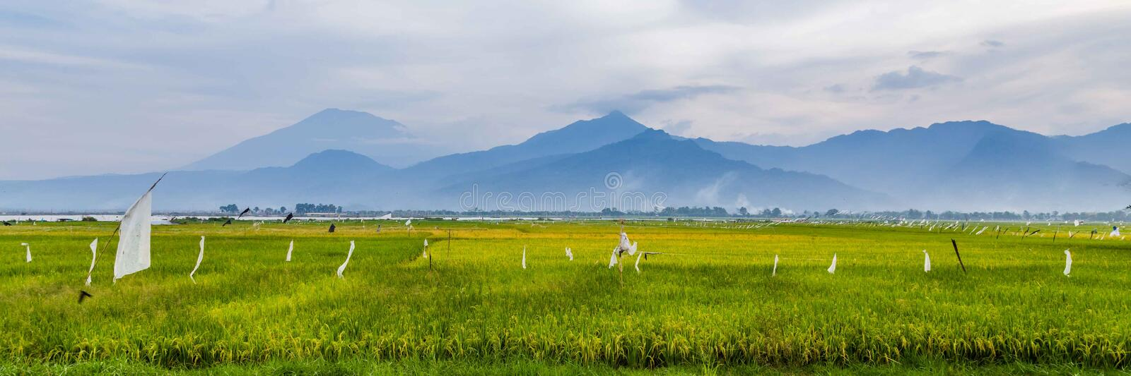 Typical landscape central Java Indonesia. Rice fields in central Java Indonesia stock photo