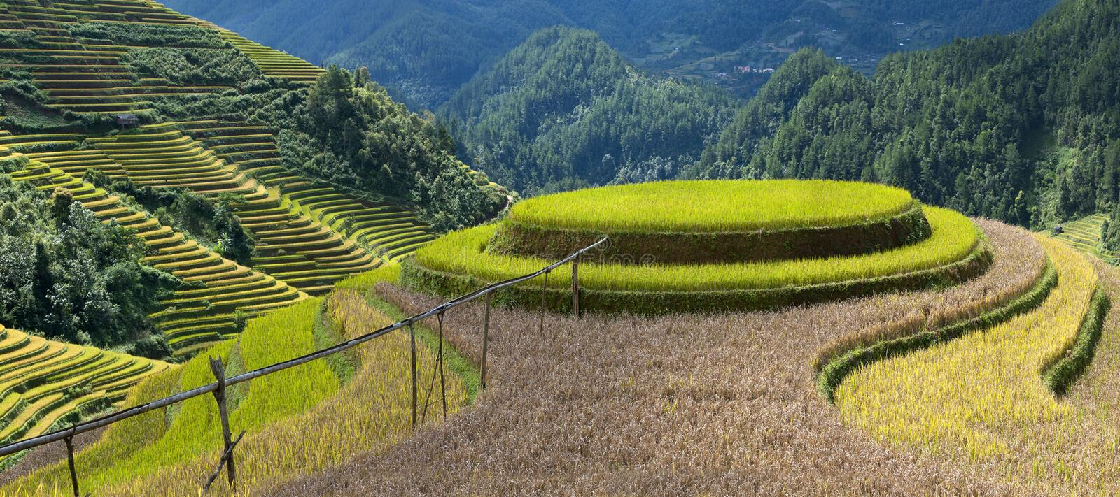 Download Rice fields stock image. Image of whater, hight, green - 41281771