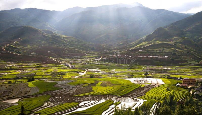 Download Rice fields stock photo. Image of vietnam, field, fields - 41281776