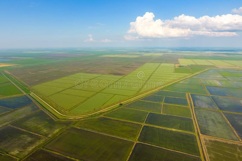 The rice fields are flooded with water. Flooded rice paddies. Agronomic methods of growing rice in the fields. Flooding the fields with water in which rice royalty free stock images