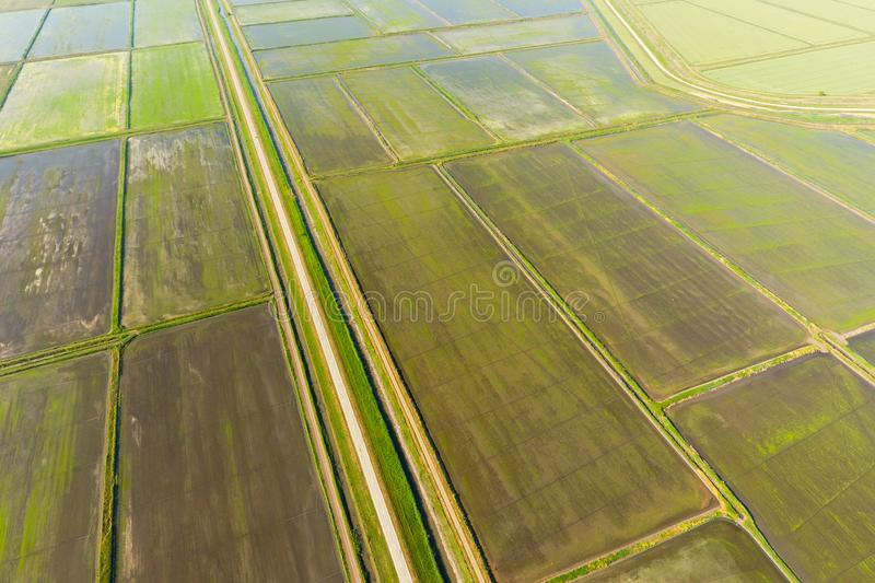 The rice fields are flooded with water. Flooded rice paddies. Agronomic methods of growing rice in the fields. Flooding the fields with water in which rice royalty free stock photos