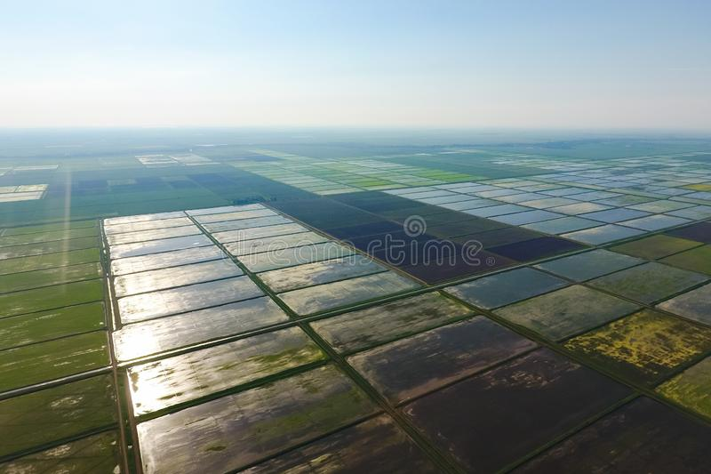 The rice fields are flooded with water. Landscape in front of the sun. Flooded rice paddies. Agronomic methods of growing rice in. The rice fields are flooded royalty free stock photos