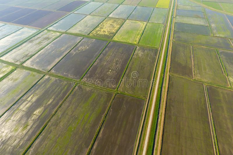 The rice fields are flooded with water. Flooded rice paddies. Agronomic methods of growing rice in the fields. Flooding the fields with water in which rice royalty free stock image