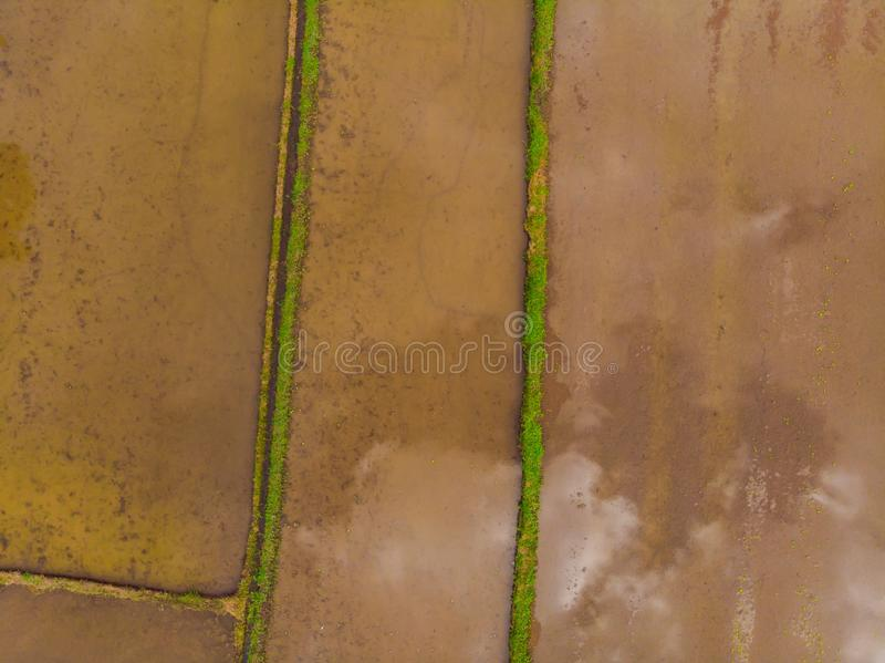 The rice fields are flooded with water. Flooded rice paddies. Agronomic methods of growing rice in the fields. Flooding. The fields with water in which rice royalty free stock photography