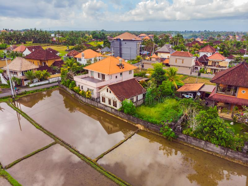 The rice fields are flooded with water. Flooded rice paddies. Agronomic methods of growing rice in the fields. Flooding. The fields with water in which rice royalty free stock photos