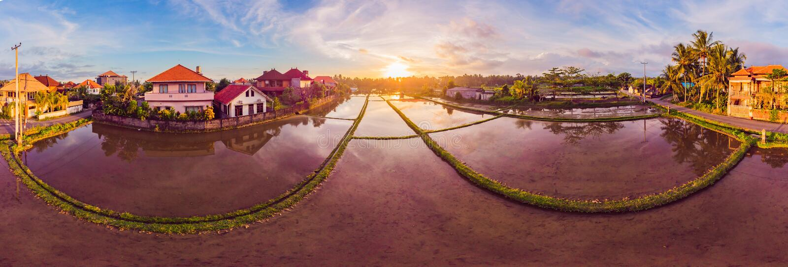 The rice fields are flooded with water. Flooded rice paddies. Agronomic methods of growing rice in the fields. Flooding. The fields with water in which rice royalty free stock image