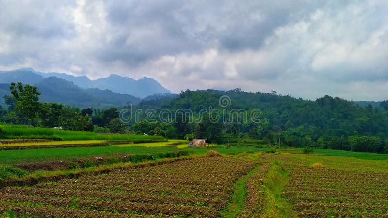 Download Rice Fields In Highlands Stock Photo - Image: 83724198
