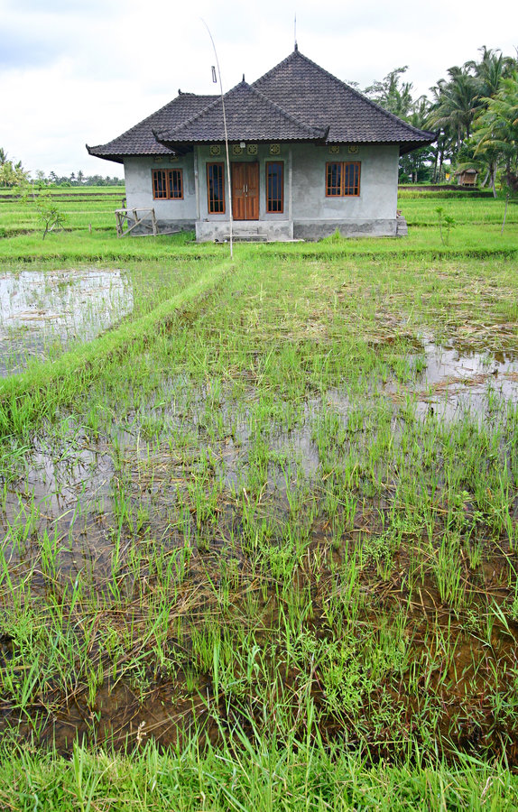 Rice fields and house, Bali, asia royalty free stock images