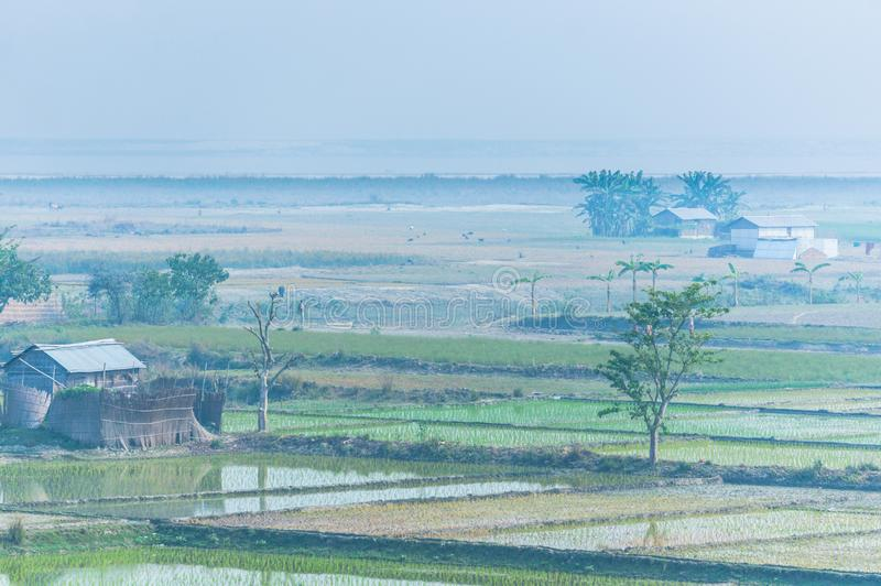 Rice fields in India, Assam near Brahmaputra river stock photo