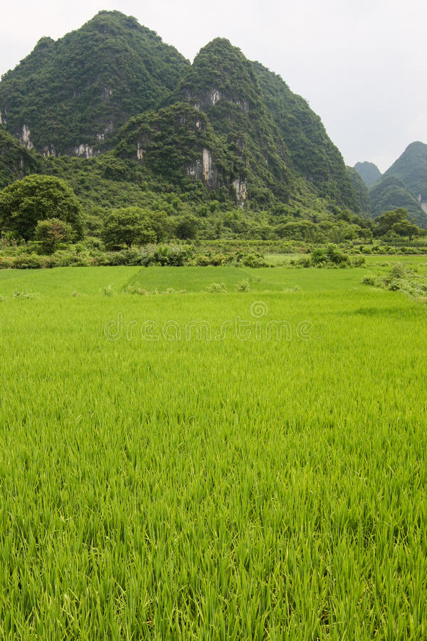 Rice fields and karst mountains landscape china stock photos