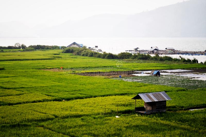 Rice fields and lakes stock photography