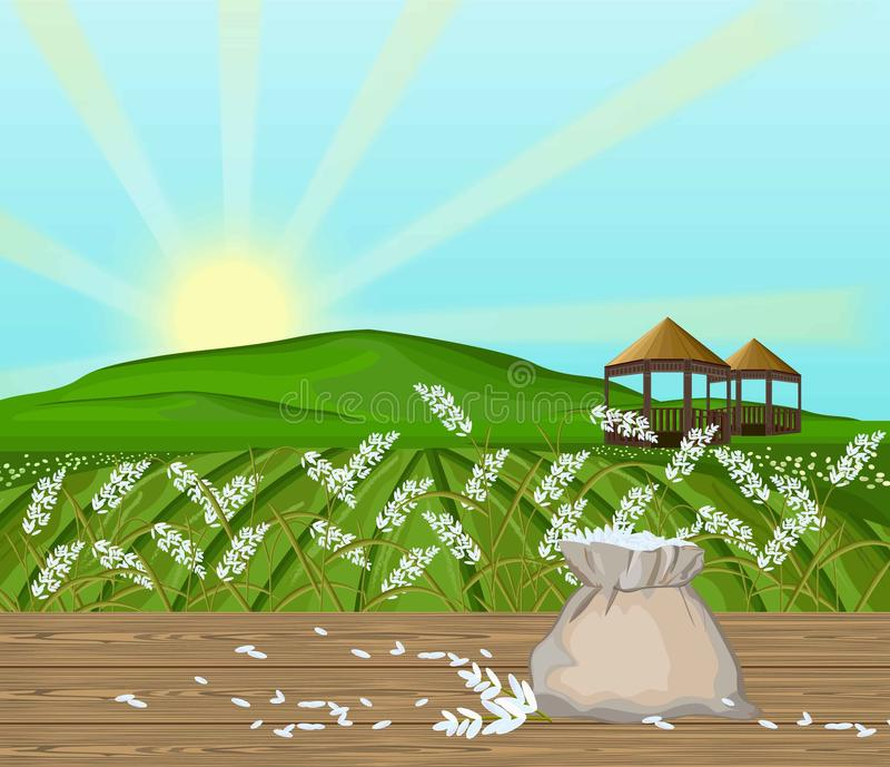 Rice fields landscape Vector. Sunshine background vector illustration